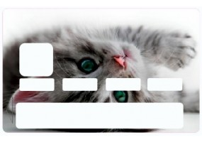sticker carte bancaire chat. Black Bedroom Furniture Sets. Home Design Ideas