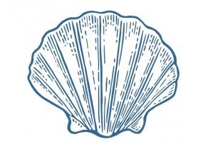 Sticker marin coquillage bleu