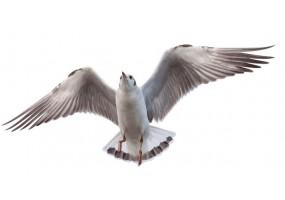 Sticker marin oiseau