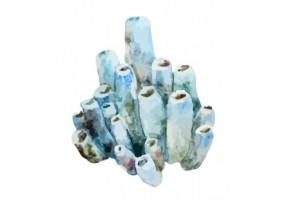 Sticker marin algue bleu