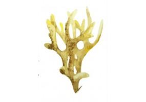 Sticker marin algue jaune