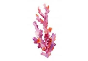 Sticker marin algue