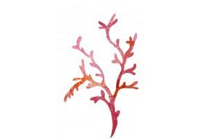 Sticker marin algue rose