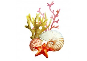 Sticker marin coquillage algue