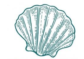 Sticker marin coquillage vert