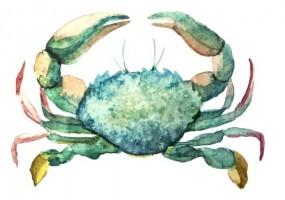 Sticker marin crabe