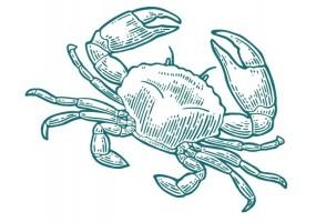 Sticker marin crabe vert