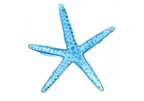 Sticker marin étoile de mer