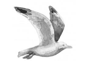Sticker marin oiseau aquarelle