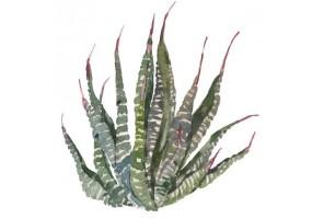 Sticker cactus feuille