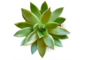 Sticker cactus fleur verte