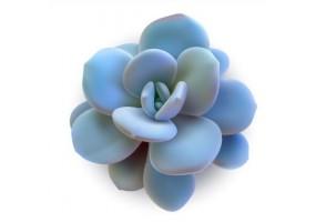 Sticker cactus