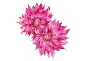 Sticker cactus rose