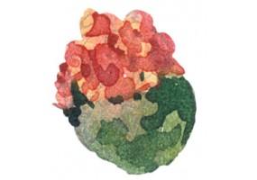 Sticker cactus aquarelle