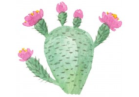 Sticker cactus décoration
