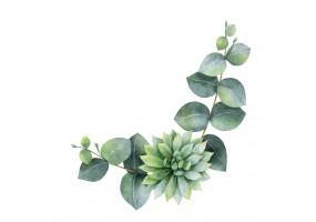 Sticker cactus feuille verte