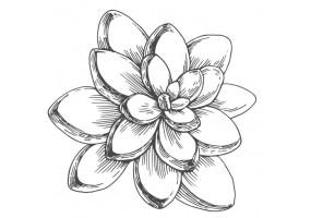 Sticker cactus fleur noir et blanc