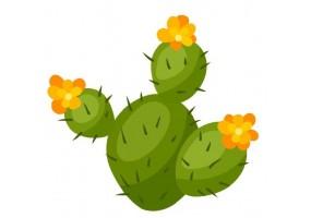 Sticker cactus fleur orange