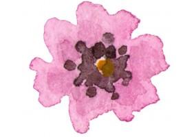 Sticker cactus fleur rose