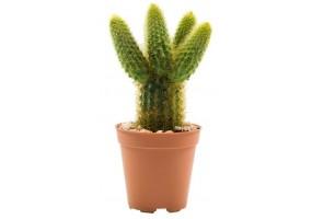 Sticker cactus pot