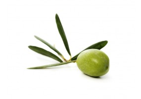 Sticker cuisine olive