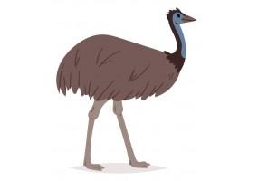 Sticker Australie autruche