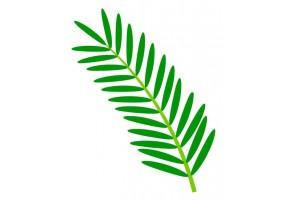 Sticker Australie feuille de palmier