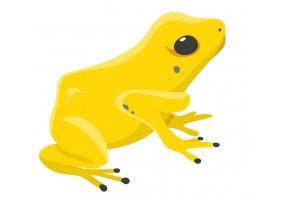 Sticker Australie grenouille jaune
