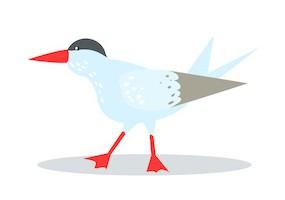 Sticker oiseau mouette