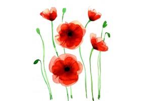 Sticker fleurs coquelicot