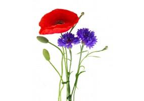 Sticker fleur coquelicot