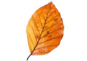 Sticker feuille automne