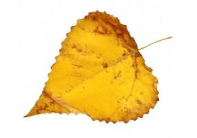 Sticker feuille automne jaune