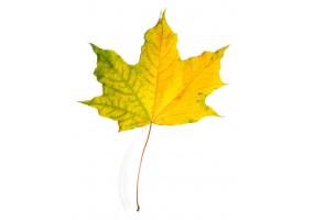 Sticker feuille verte jaune