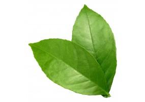 Sticker feuilles verte