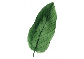 Sticker grande feuille verte
