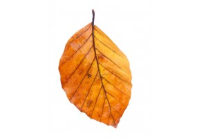 Sticker mural feuilles automne
