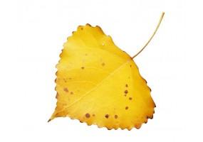 Sticker mural feuilles jaune
