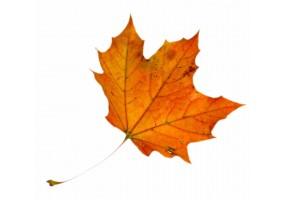 Sticker feuilles automne