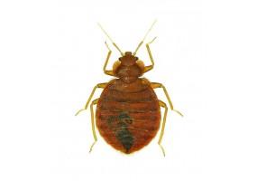 Sticker mural insecte