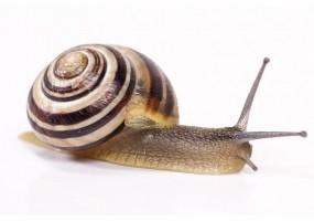 Sticker escargot