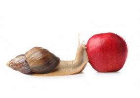 Sticker escargot pomme