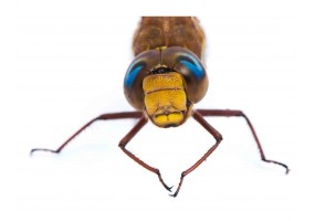 Sticker insecte