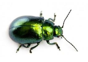 Sticker insecte vert