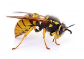 Sticker abeille