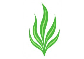Sticker algue