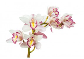 Sticker orchidée