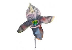 Sticker orchidée noire