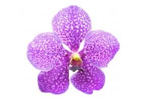 Sticker orchidée violette