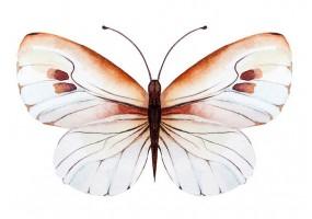 Sticker papillon blanc